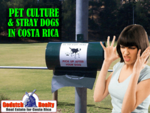 Street dogs and domestic animals Costa Rica