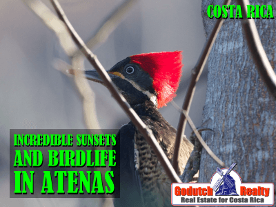 sunsets and birdlife in Atenas