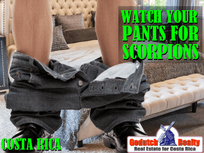 Watch your pants for a scorpion in Costa Rica