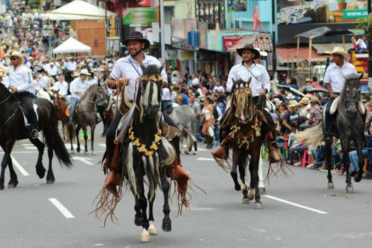 TicoNuevo dodging obstacles at the horse parade