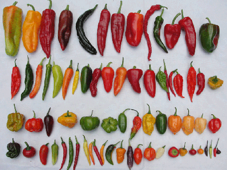 Try the different chili peppers until you find the one you like best