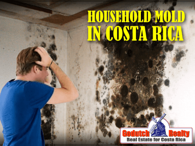 Can Household Mold In Costa Rica Affect Your Health