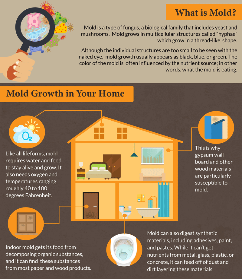 Most Common Forms of Household Mold - pic 1