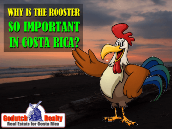 Why is the rooster so important in Costa Rica?