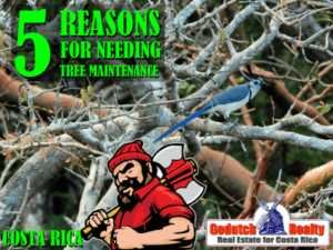 5 Reasons to pay attention to Tree Maintenance on your property