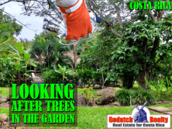 Looking After The Trees In Your Costa Rican Garden
